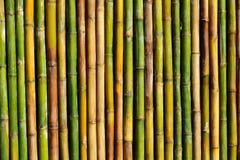 Good Quality Natural Bamboo Texture Stock Photo