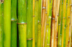 Good quality natural bamboo texture Stock Photos