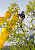 Good Samaritan. A young man climbs a tree to free an entangled kite Royalty Free Stock Photos