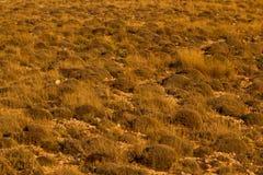 Good scenery of mountain landscape, Turkish. Alp vegetation. Tundra Stock Image