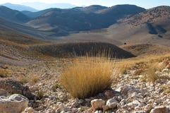 Good scenery of mountain landscape, Turkish. Alp vegetation. Tundra Royalty Free Stock Image