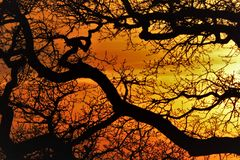 Good scenery Twilight sunset branches royalty free stock photos