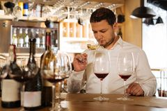 Nice smart man holding a glass of wine. Good smell. Nice smart man holding a glass of wine while checking its smell Stock Image