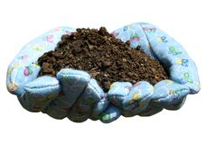Good Soil. Hands in gardening gloves holding potting soil Stock Photo