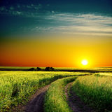 Good sunset and road in green field Royalty Free Stock Photo