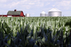 A Good Year. Red barn and silos with corn in the foreground Royalty Free Stock Photo