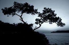 Goodbye my sunshine. Trees on Prince's Islands Istanbul Turkiye Royalty Free Stock Photos