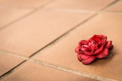 Goodbye rose. Conceptual and abstract photo. Goodbye red rose on the floor. Conceptual and abstract photo stock photography