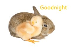 Goodnight card. With baby chick and rabbit Stock Photos