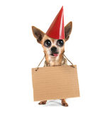 A goofy chihuahua holding a sign Royalty Free Stock Images