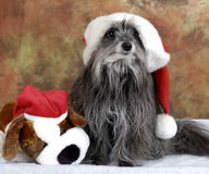 Goofy Christmas dog Royalty Free Stock Photography