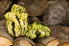 Goofy gourds Stock Images