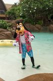 Goofy in a pool. Goofy stands in the lazy river in Aulani, Hawaii royalty free stock photos