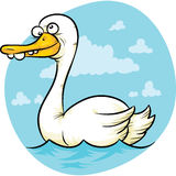 Goofy Swan Stock Photography