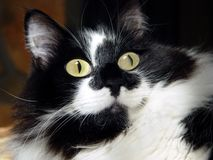 Google observa Kitty Imagen de archivo libre de regalías