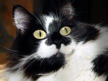 Google observent Kitty Image libre de droits