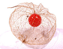 goosberry physalis καρπού Στοκ Φωτογραφία