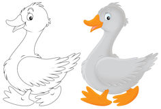 Goose. Grey goose walking, color illustration and black and white outline on a white background Stock Images