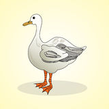 Goose. Aviculture and poultry. Stock Photos