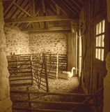 Goose in the Barn Royalty Free Stock Image