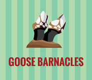 Goose barnacles Stock Images