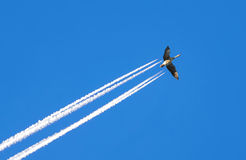 Goose on blue sky Stock Images