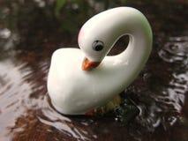 Goose stock image