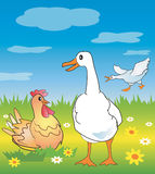 Goose_chicken_meadow. Goose and chicken in a spring meadow, Vector illustration available for download Royalty Free Stock Image