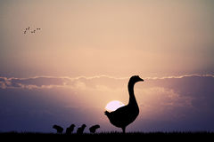 Goose with chicks at sunset. Illustration of goose with chicks at sunset Royalty Free Stock Images