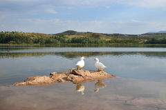 Goose Couple. At La Grajera Park, La Rioja, Spain Stock Photo