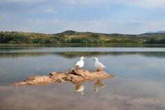 Goose Couple Stock Photo