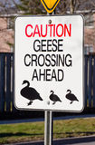 Goose Crossing Sign Stock Images