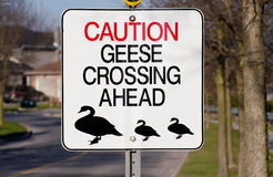 Goose crossing sign Stock Image