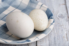 Goose and Duck Egg Stock Photography