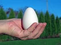 Goose egg 3 Stock Images
