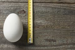 Goose egg on wooden table with a yardstick. A goose egg on a wooden table with a yardstick Royalty Free Stock Images