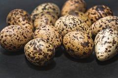 Goose eggs Stock Image