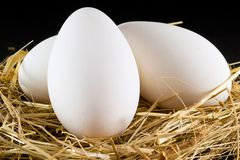 Goose eggs Stock Photography