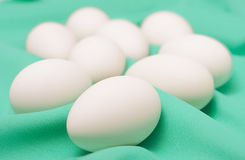 Goose eggs on a green background Stock Image