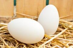 Goose eggs Stock Photos
