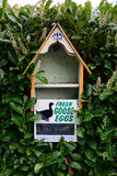 Goose eggs for sale Stock Photos