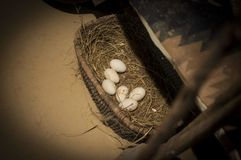 Goose eggs in straw trough royalty free stock photography