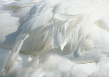 Goose feather. Close-up photot about a goose feather royalty free stock photos
