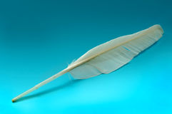 Goose feather Royalty Free Stock Images