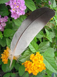 Goose feather. A Goose feather at the top of the flowers Stock Photo