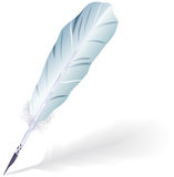 Goose feather. Royalty Free Stock Photo