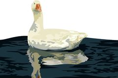 Goose floating on water vector. Vector illustration of a white goose floating on the dark water, water reflections, isolated object, white background, reflection Stock Image