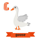 Goose. G letter. Cute children animal alphabet in vector. Funny Royalty Free Stock Photography