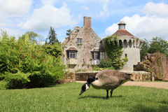 Goose and garden in Kent Stock Image