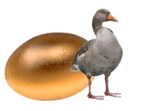 Goose with a golden egg Royalty Free Stock Photo